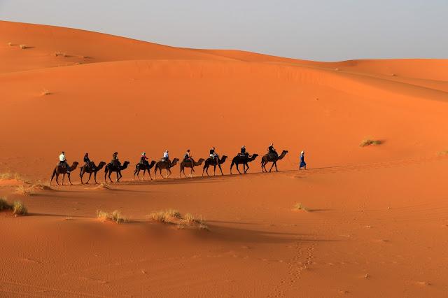 sahra çölü deve