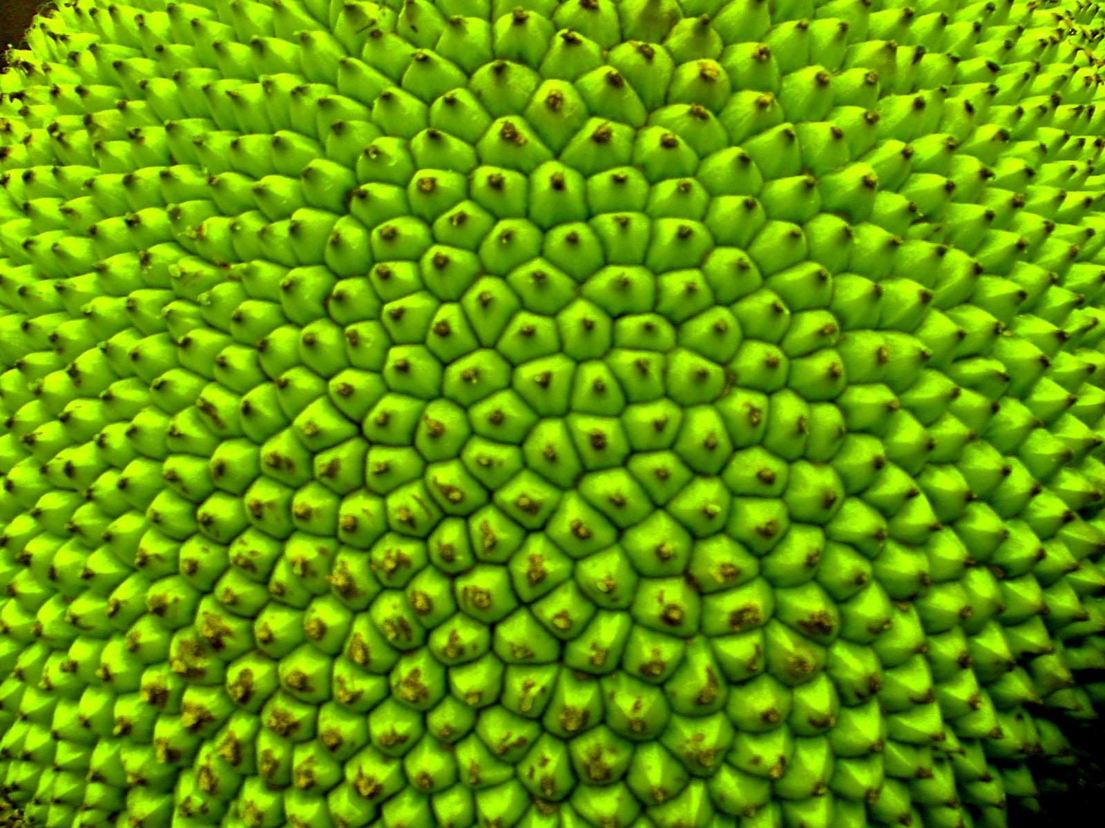 desktop bangladesh fruits pictures - photo #47