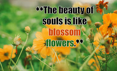 Blooming Flower Quotes