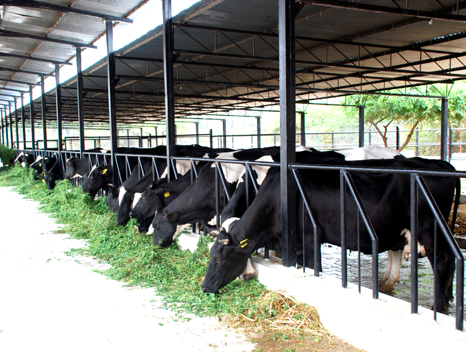 Dairy farm business plan in punjab india