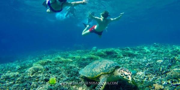 akomodasi open trip wisata pulau harapan