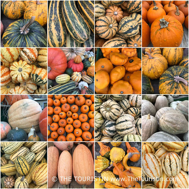 A large variety of edible pumpkins harvested in late summer and autumn.