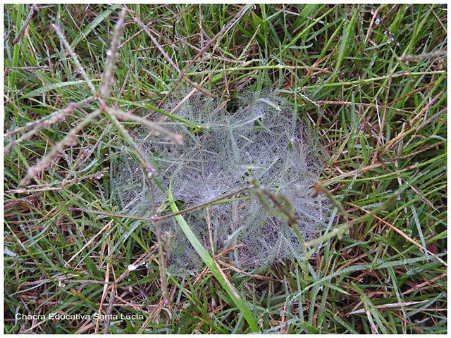 Tela de araña con gotas de rocío-Chacra Educativa Santa Lucía