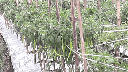 Jasa Import Undername spesialis hortikultura impor dan ekspor