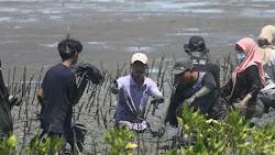 Pemuda Maros Peduli, Penanaman 10.000 Mangrove