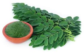 Moringa benefits