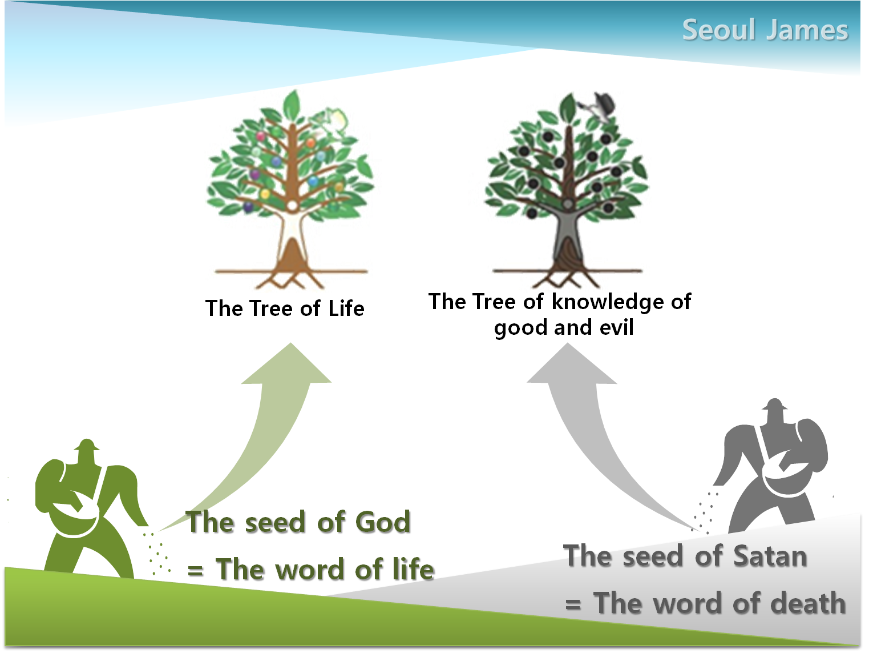 Shincheonji Testify The Tree Of Life Meaning Secrets Heaven