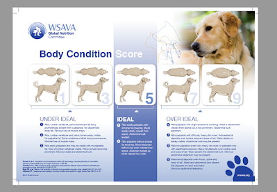 Dog Heart Health, How to keep a dog's heart healthy, optimal dog body condition