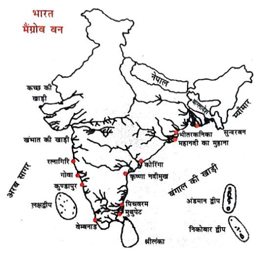भारत के प्रमुख मैंग्रोव