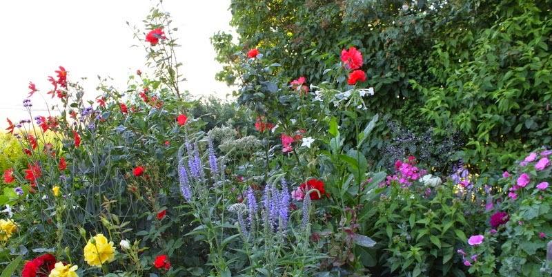 En have på Mors