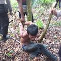 Terduga Pelaku Pemerkosaan dan Pembunuhan di Birem Bayeun Berhasil Diringkus Tim Gabungan TNI-Polri