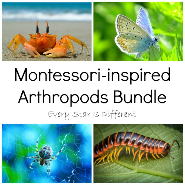 Montessori-inspired Arthropods Bundle from Every Star Is Different