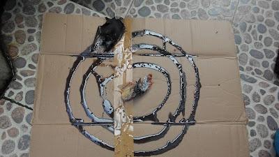 Jangan Remehkan Keberadaan Lem Tikus Dalam Rumah Walet