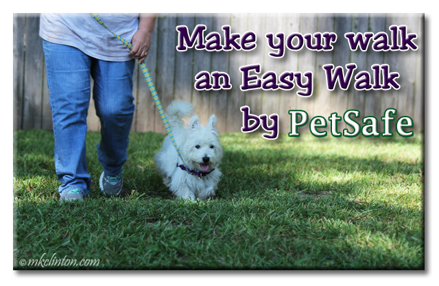 "Pierre Westie walking with meme ""Make your next walk an Easy Walk by PetSafe"""