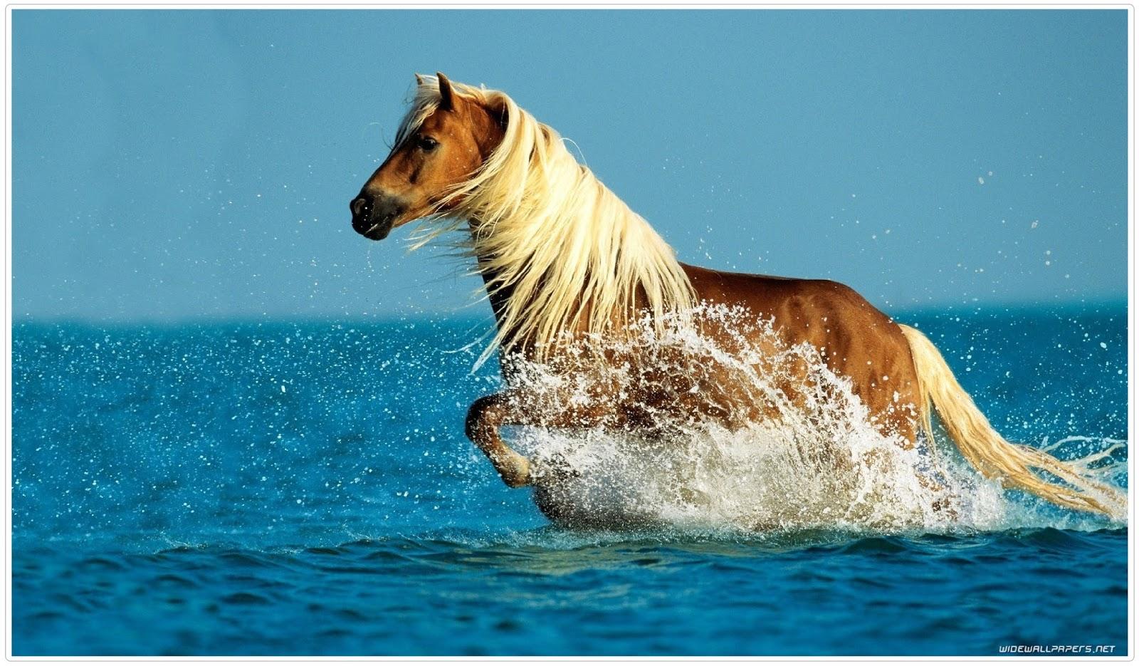 Most Inspiring   Wallpaper Horse Summer - horse%2Bin%2Bthe%2Bsea%2Bimage%2Bhd  Gallery_974451.jpg