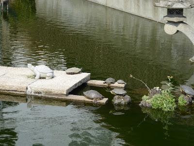 大阪天満宮 星合池の亀