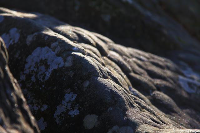 5o nuances de grès douces et chaudes, Fontainebleau