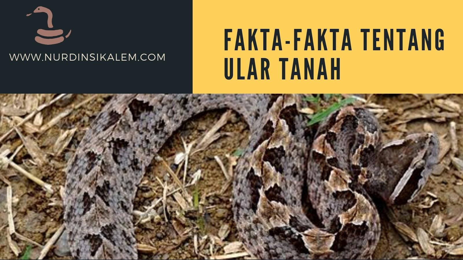 Gambar ular tanah 1