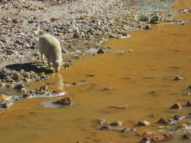 Contaminación de los ríos afecta la vida animal y de la población