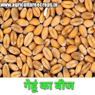 बीज क्या है, बीज और अनाज में अंतर, बीज के प्रकार, what is seed , definition of seed