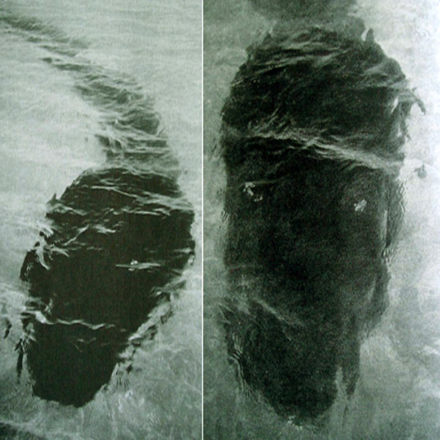 PARANORMAL EVIDENCE CAUGHT ON CAMERA: SEA MONSTERS CAUGHT ...