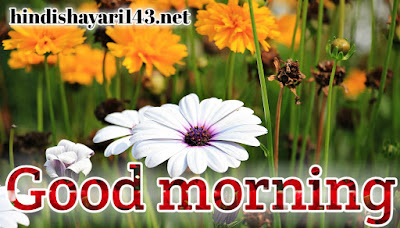 Good morning latest beautiful images with flowers