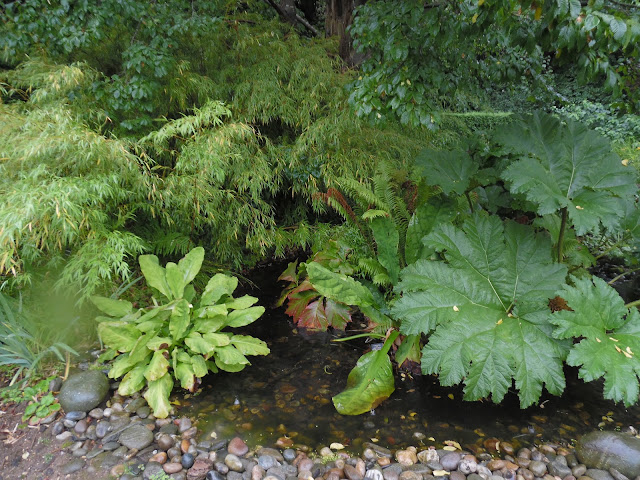 Stream and Bog Garden , woda w ogrodzie