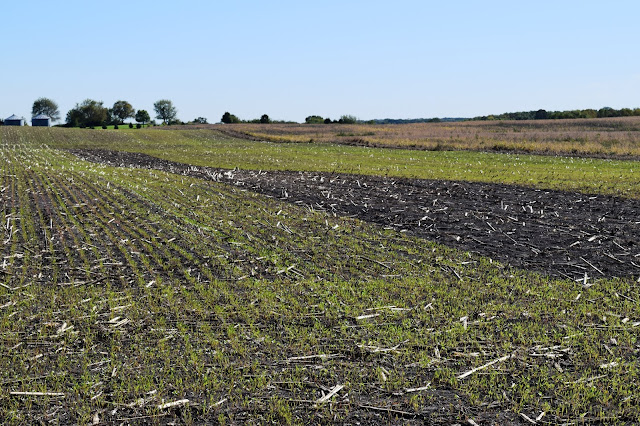 cover crop minnesota resources