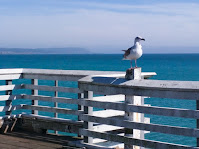 Seagull perched atop the safety railing on a pier