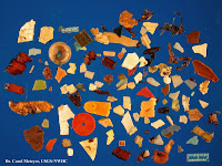 Plastic found inside dead Northern Fulmar – Oct. 2012 – photo by Carol Meteyer, USFWS