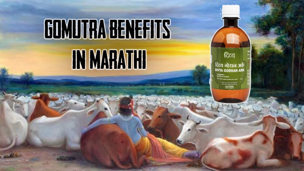 Gomutra Benefits in Marathi