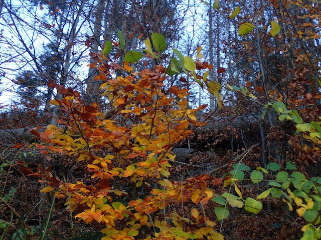 Kolory jesieni w Tatrach