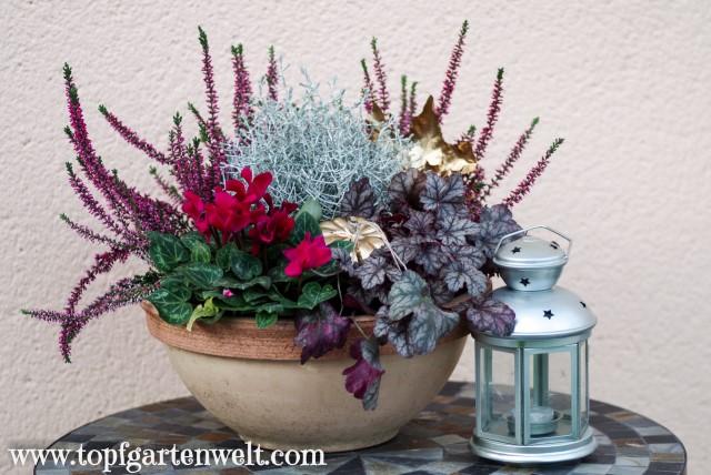 Herbstschale für den Garten mit Heide bepflanzen - Gartenblog Topfgartenwelt