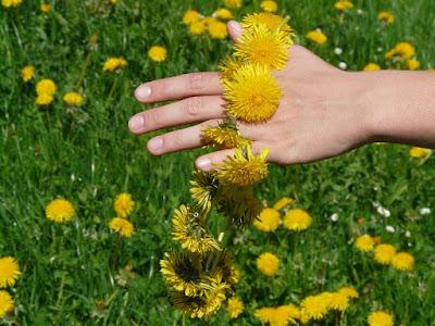 Hand holding dandelions strung together