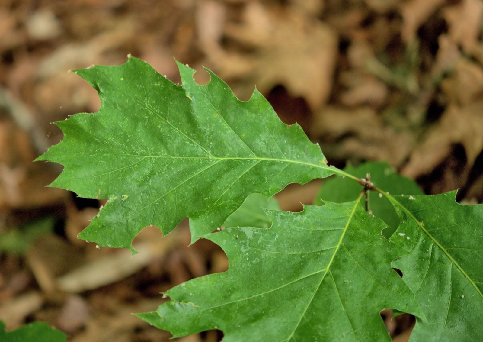 Nature rambling ramble report may