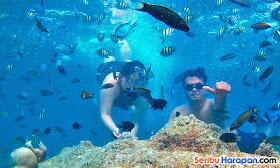 underwater wisata pulau harapan