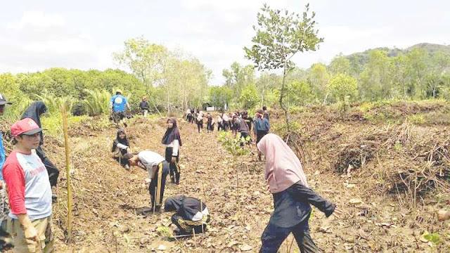 Ribuan Mangrove Ditaman di Pantai Ayah; Bakal Jadi Laporatorium Alam