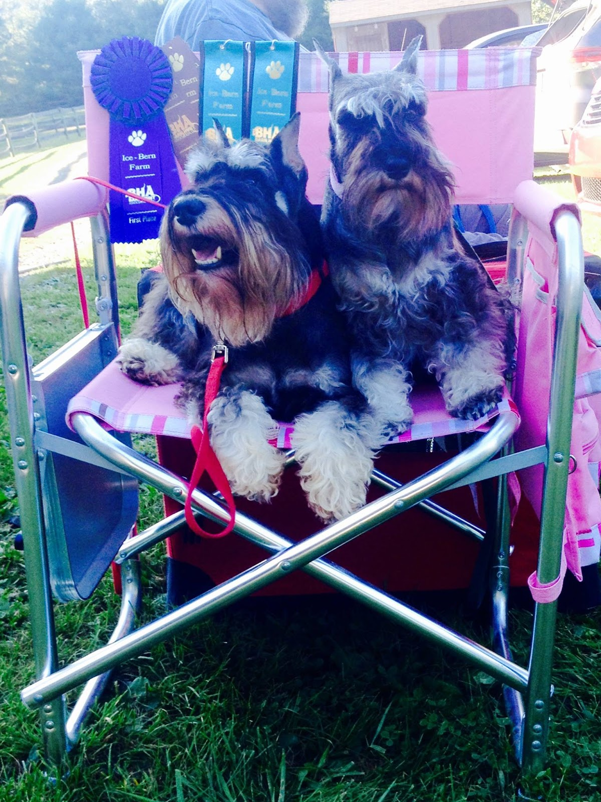 Dog Show In Middleburg Pa
