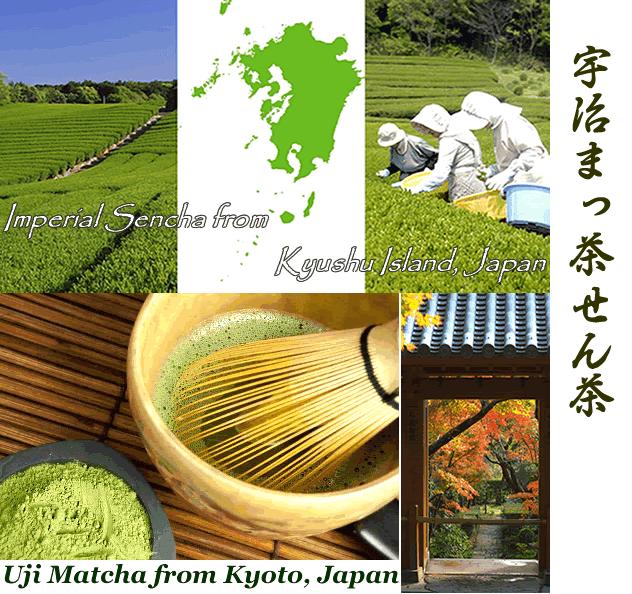 Uji matcha blend Imperial sencha japanese green tea premium uji Matcha green tea powder aojiru young barley leaves green grass powder japan benefits wheatgrass yomogi mugwort herb