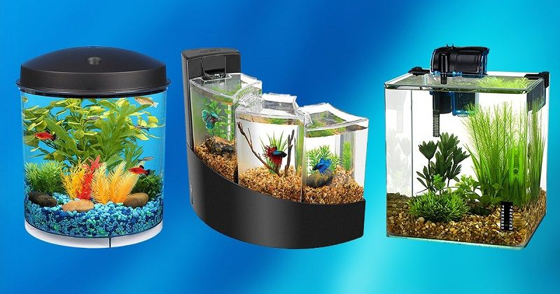 Betta Tank with Filter and Plant