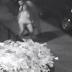 Vídeo: Mulher luta com estuprador e consegue fugir de ataque, assista