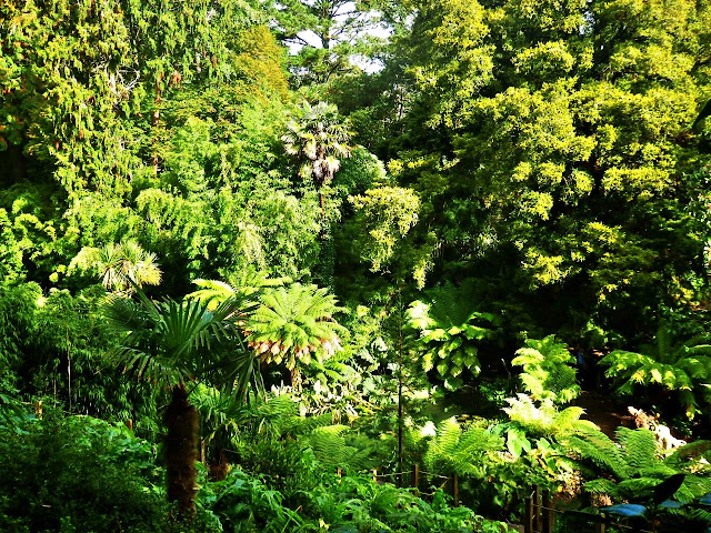 A mixture of trees and greenery at Lost Gardens of Heligan, Cornwall