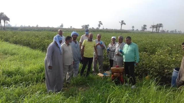 زراعة الفيوم بدأ الرشة الثالثه لمكافحة افات القطن بمراكز المحافظة
