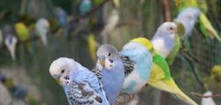 اختبار الطيور