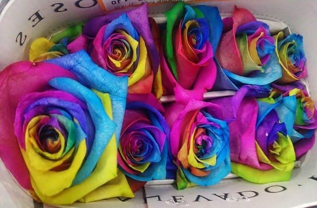 gambar beberapa bunga mawar pelangi yang menawan