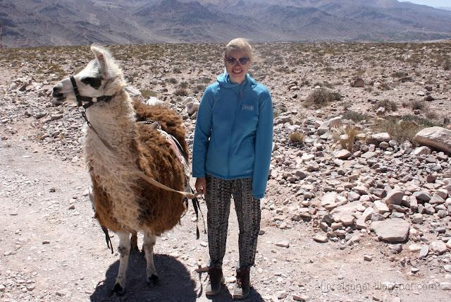 Argentina lamas