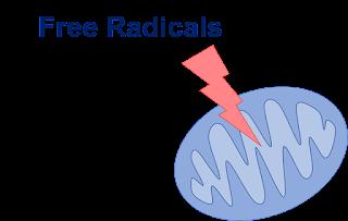 radikal bebas memicu stres oksidatif