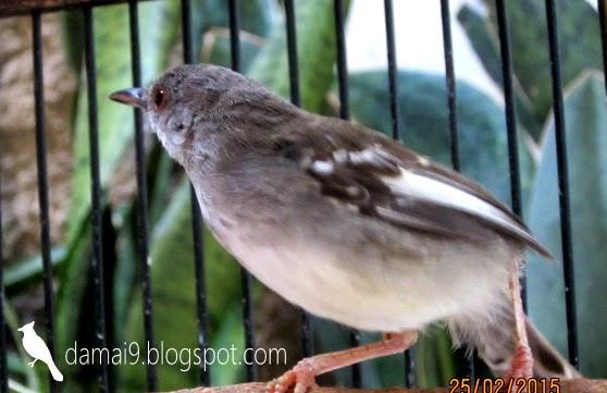 Bct dengan burung kecil tuh susah