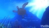 Immergersi nell'Oceano in 3D per esplorare fondali marini, Reef e pesci tropicali