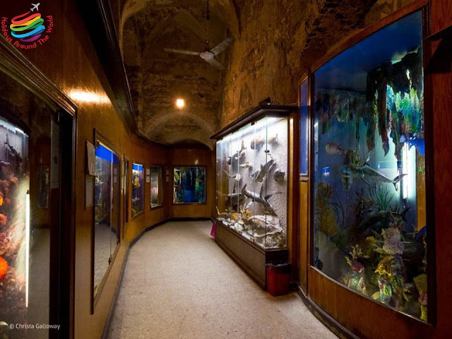 National Museum of Marine Biology and Aquarium - Alexandria